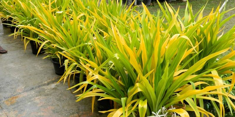 Greenleaf Plant Rentals